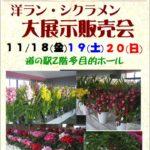 シクラメン・シンビジューム大展示販売会