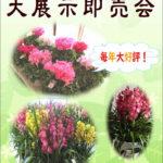 飯島産鉢花展のお知らせ。