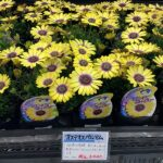 下平園芸さんのお花達。