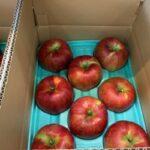 """りんご""""シナノスイート""""贈答箱入荷です。"""